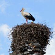 Čapí hnízdo vstupuje do podvědomí nevinných lidí